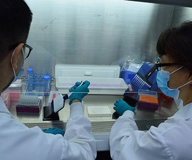 eOD-GT8 immune-stimulating protein