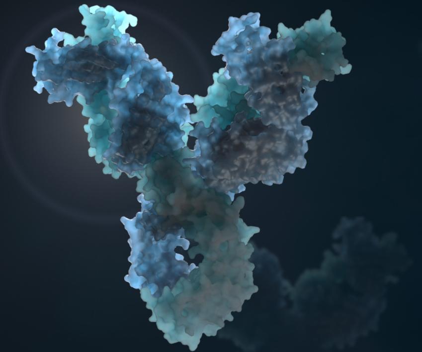 HIV antibody