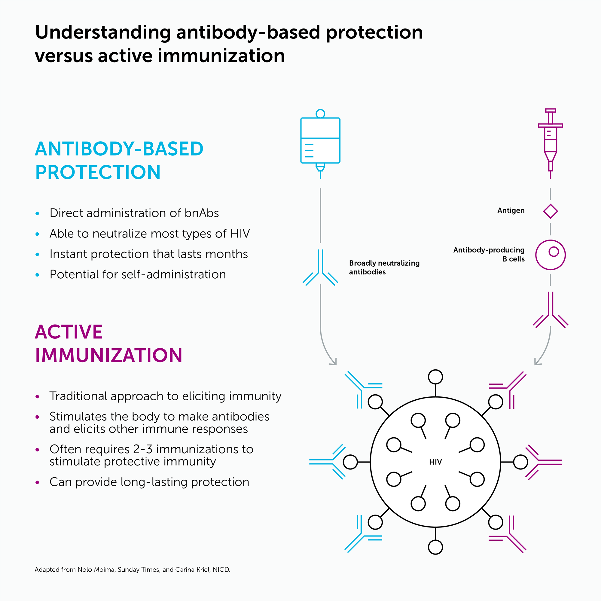 Antibodies vs active immunization